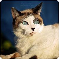 Adopt A Pet :: Molly - Cincinnati, OH