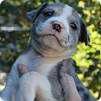 Adopt A Pet :: Fiona - Bayshore, NY