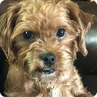 Adopt A Pet :: Pistol Annie - Columbus, OH