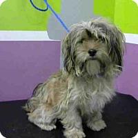 Adopt A Pet :: DORY - Houston, TX