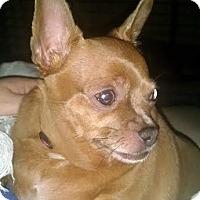 Adopt A Pet :: Mila and Bob - Hazel Park, MI