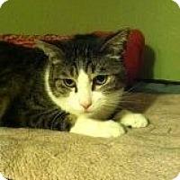 Adopt A Pet :: JR - La Canada Flintridge, CA