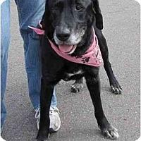Adopt A Pet :: ABE - La Mesa, CA