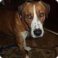 Adopt A Pet :: BAXTER - Raleigh, NC