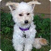 Adopt A Pet :: Cameron - La Costa, CA