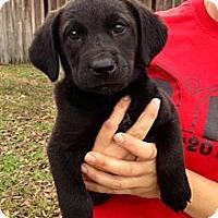 Adopt A Pet :: Mattie B - Richmond, VA