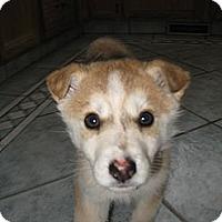 Adopt A Pet :: Mandi - Egremont, AB