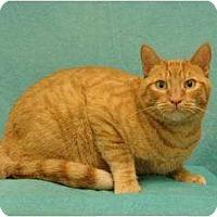 Adopt A Pet :: Magellan - Sacramento, CA