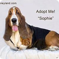 Adopt A Pet :: Sophie - Acton, CA