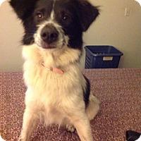 Adopt A Pet :: Bandida - San Diego, CA