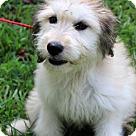 Adopt A Pet :: Mimosa