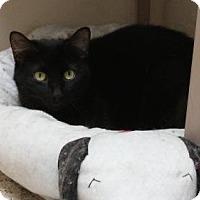 Adopt A Pet :: Peg - marine, MI