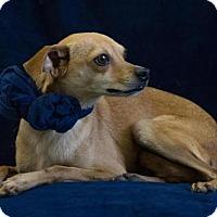 Adopt A Pet :: Charlie - Phelan, CA