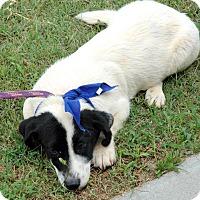 Adopt A Pet :: Murray - Lebanon, CT