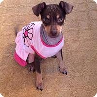 Adopt A Pet :: Gigi - Atlanta, GA