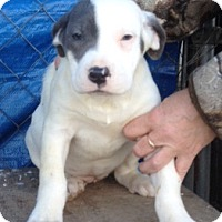 Adopt A Pet :: Miko - Medora, IN