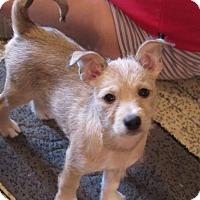 Adopt A Pet :: Benjamin - Broken Arrow, OK