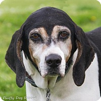 Adopt A Pet :: Frieda - Enfield, CT