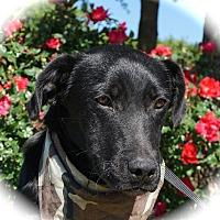 Adopt A Pet :: Dax - Blanchard, OK