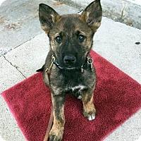 Adopt A Pet :: Ansel-Pending! - Detroit, MI
