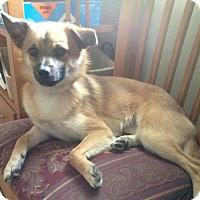 Adopt A Pet :: Coach - Catharpin, VA