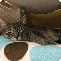 Adopt A Pet :: Miss Pretty - Byron Center, MI