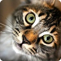 Adopt A Pet :: I'M KYLEE! I'M A TALKING CHIRPING FLUFFY PURRBOX! - jacksonville, FL