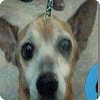 Adopt A Pet :: Nacho - Austin, TX