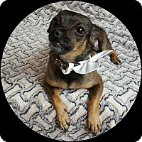 Adopt A Pet :: Miley - Yucaipa, CA