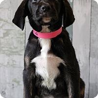 Adopt A Pet :: Neva - Waldorf, MD