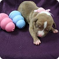 Adopt A Pet :: Grumpy - Tehachapi, CA