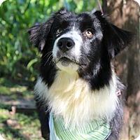 Adopt A Pet :: Huey - SOUTHINGTON, CT