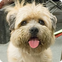 Adopt A Pet :: Benji - Loudonville, NY