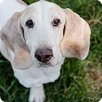 Adopt A Pet :: Jones (Little Man) - Salt Lake City, UT