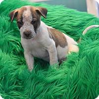 Adopt A Pet :: Pike - Groton, MA
