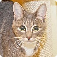 Adopt A Pet :: Ella - Eastsound, WA