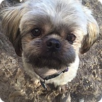 Adopt A Pet :: Chewy - Hinesville, GA