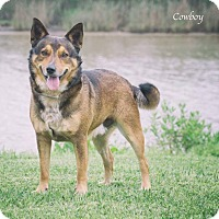 Adopt A Pet :: Rusty - Manhattan, KS