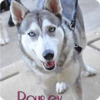 Adopt A Pet :: Rousey - Carrollton, TX