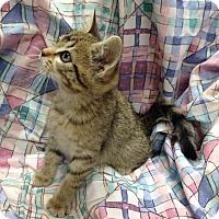 Adopt A Pet :: Meadow - Larned, KS