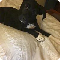 Adopt A Pet :: Kooper - Lancaster, PA
