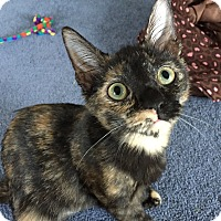 Adopt A Pet :: Calista - Virginia Beach, VA