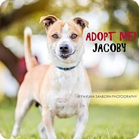 Adopt A Pet :: Jacoby - Bradenton, FL