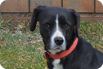 Labrador Retriever Mix Dog for adoption in New Cumberland, West Virginia - Diana