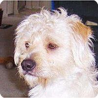 Adopt A Pet :: Alvin - Orange Park, FL