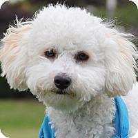 Adopt A Pet :: Savannah - La Costa, CA