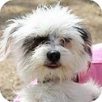 Adopt A Pet :: Fandango - Austin, TX