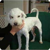 Adopt A Pet :: Peter Z - La Costa, CA