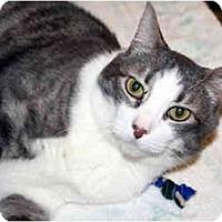 Adopt A Pet :: Douglas - Racine, WI