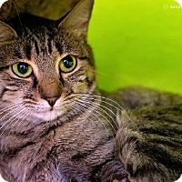 Adopt A Pet :: Taxi - Tucson, AZ